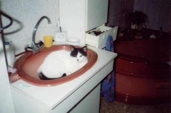 Lisa_lavabo